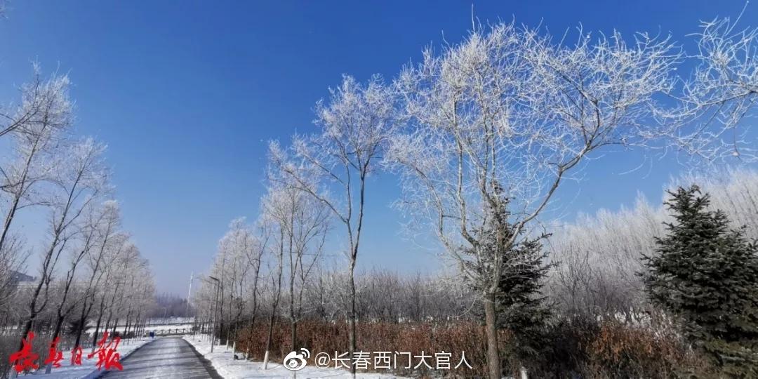 昨天伊通河南三环北侧路边雾凇,看见了吗?(长春日报)