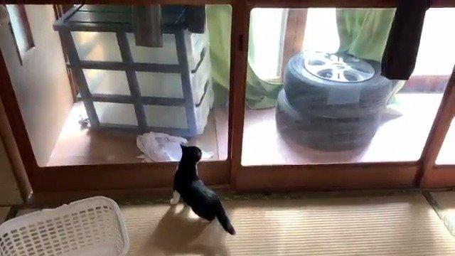 看这个奶牛猫戳纸窗真解压twi:takuma_matsuo_