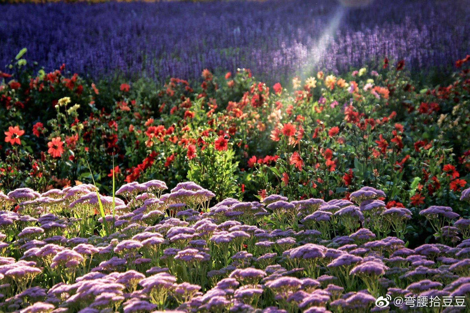 世上最美丽的是你们 这些安静的开在草原上的花 她们用笑脸歌唱阳光