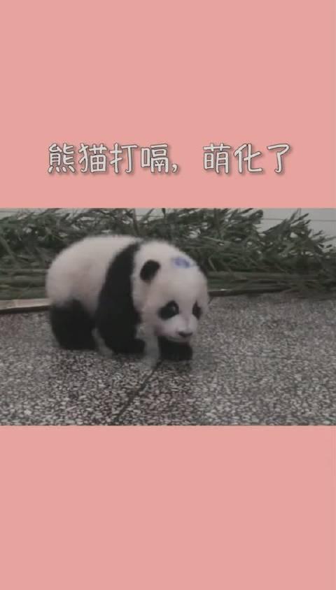 可爱的动物,你听过熊猫打嗝吗?真是太萌了