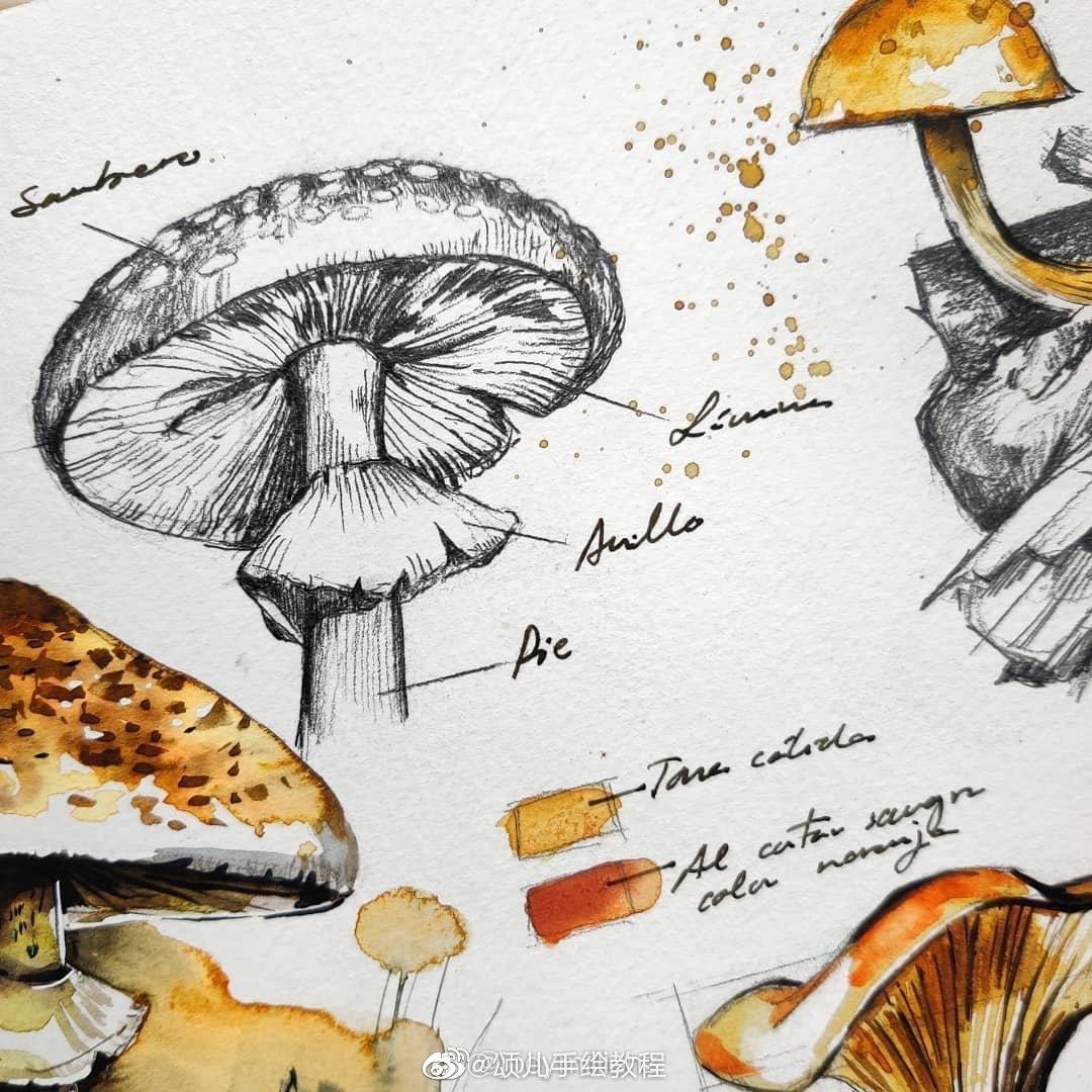 植物学家水彩手稿 a.arafilla