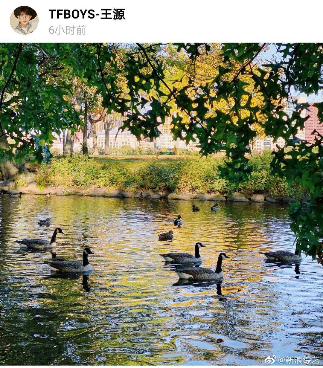 更新绿洲分享随手拍风景照,不料有粉丝发现照片上有加拿大鹅