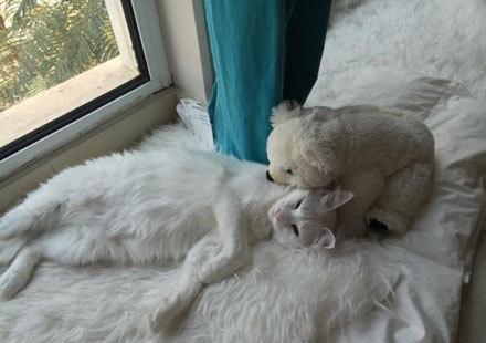 每只猫咪,都有一个从小陪伴长大的布娃娃