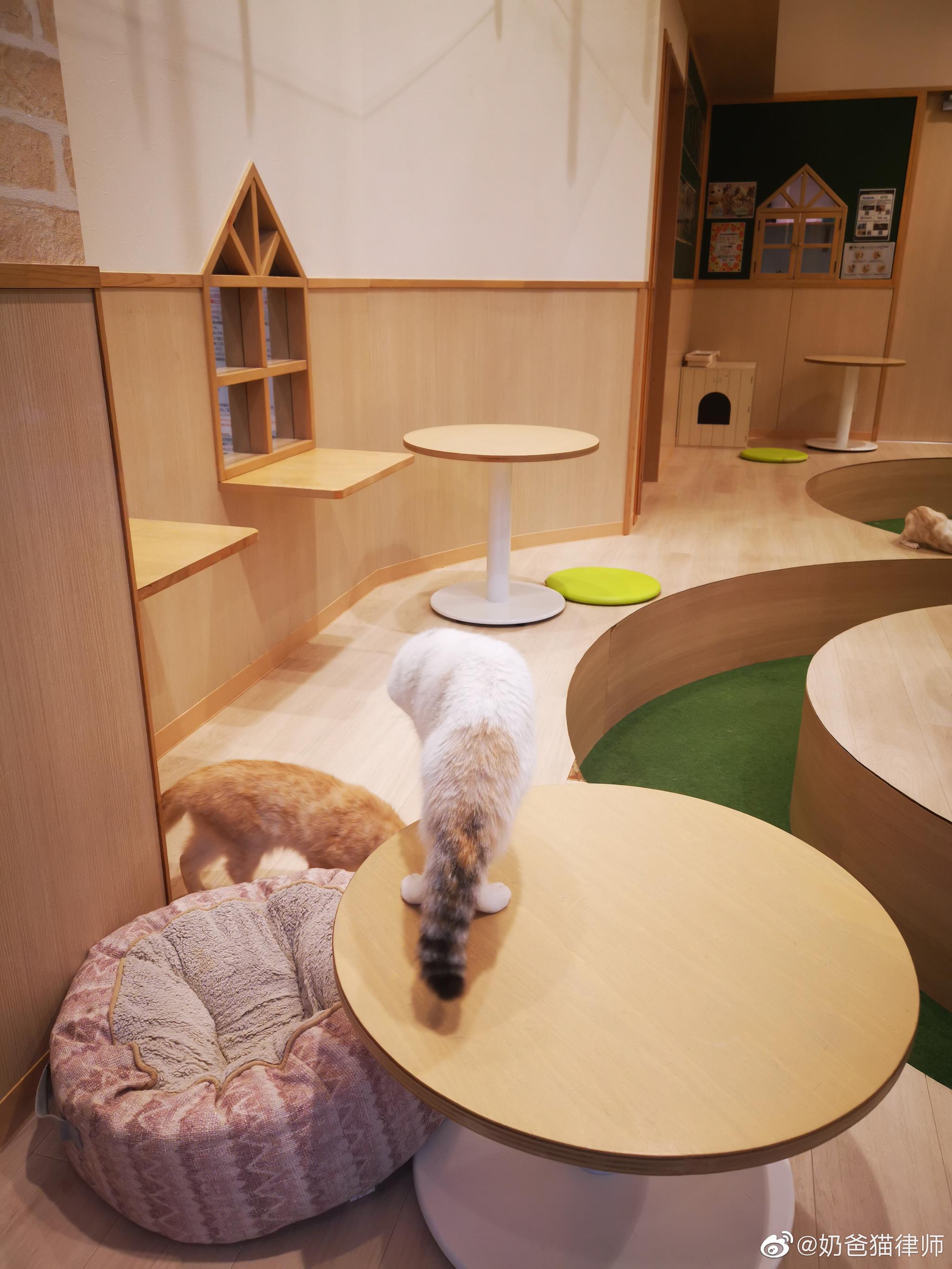 日本的猫咖,五十人民币三十分钟好多好多猫