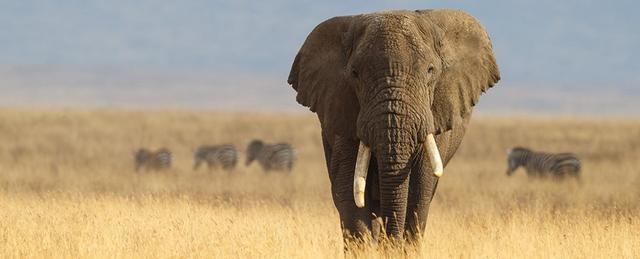 怀孕时间最长的哺乳动物,妊娠期22个月