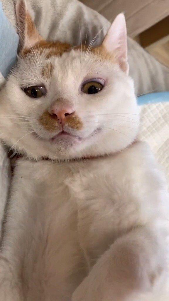 做完绝育的猫:非要我满眼失望的看着你吗