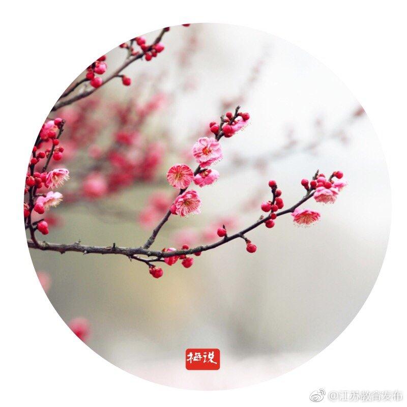 春意渐浓,@无锡商业职业技术学院 梅林里的梅花竞相绽放