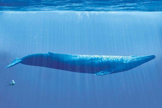你知道世界上最大的哺乳动物和最小的哺乳动物差多少倍吗?