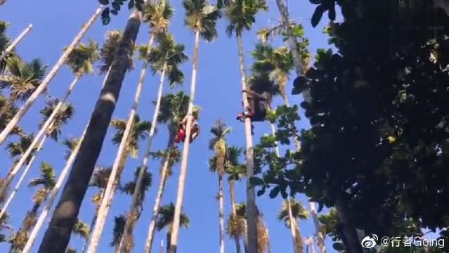 我眼中的海南岛9秒10米,看黎族小哥哥徒手爬上槟榔树