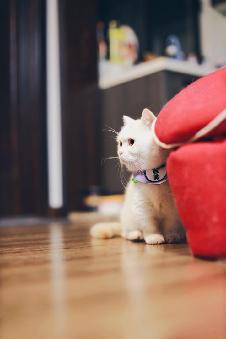 早呀这里是端庄可爱小猫咪