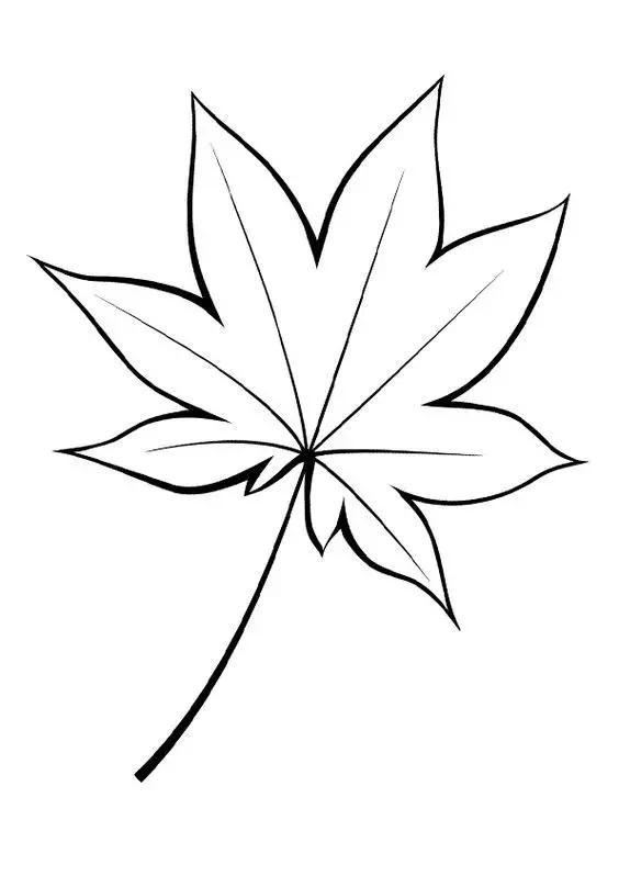 枫叶简笔画手绘图