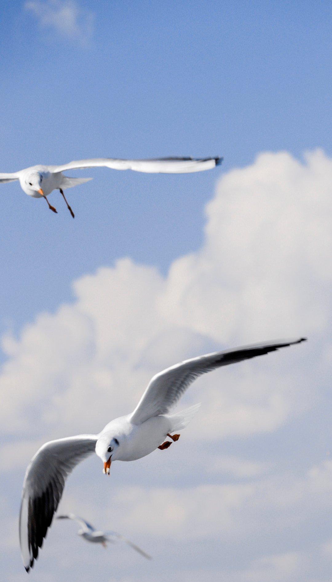 """""""你是飞鸟,我是沉船。"""":@Enzoci"""
