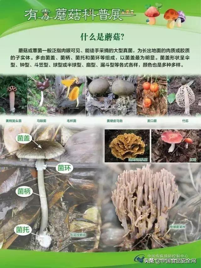 鲜美异常却要人命!野生菌菇种类这么多,到底哪个能吃哪个不能吃?