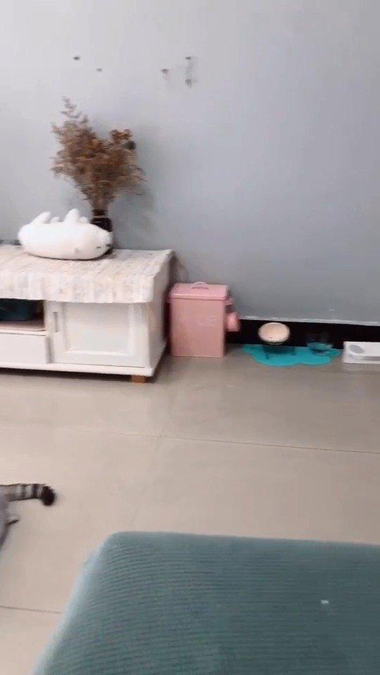 想养猫的同学请注意,如果家里买拖鞋的话,记得给猫也买上
