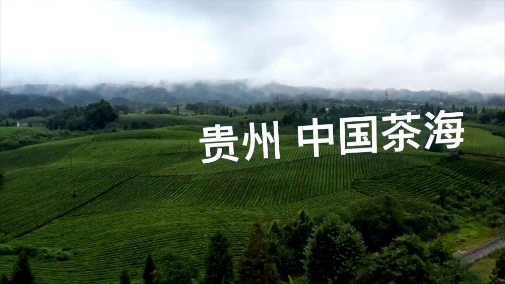 贵州的湄潭县,这里年平均气温14.9度,也是个盛产茶叶的地方