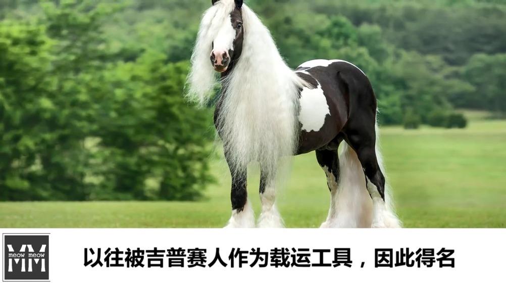 十种世界上最漂亮的马10.安达卢西亚马9. 阿拉伯马8. 阿帕卢萨马7