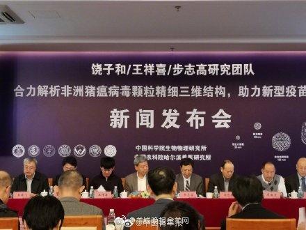 中国研制的非洲猪瘟疫苗正在接受评估