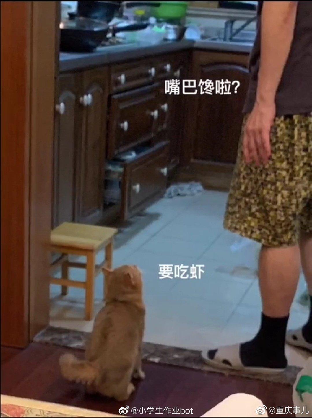 爸爸说你要是养猫我就把猫扔出去 结果我的虾没了 (小学生作业bo