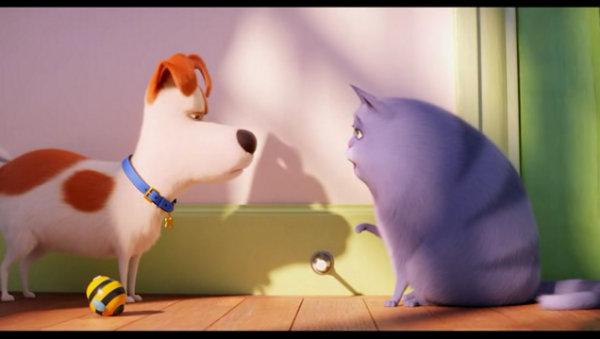 猫狗总选举,拉票理由搞笑!《 》上映纪念,你是猫奴还是狗奴?