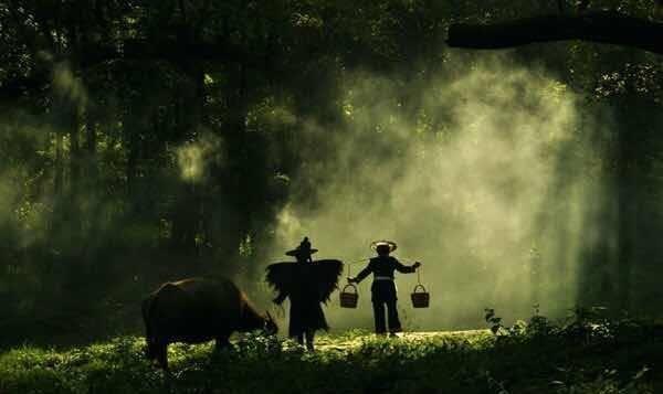 福建杨家溪,榕树林下的田园牧歌 丨摄影师 .