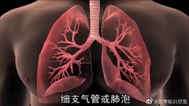 为什么肺癌是高发癌症之一,3D动画告诉你真相!看完太震撼了。
