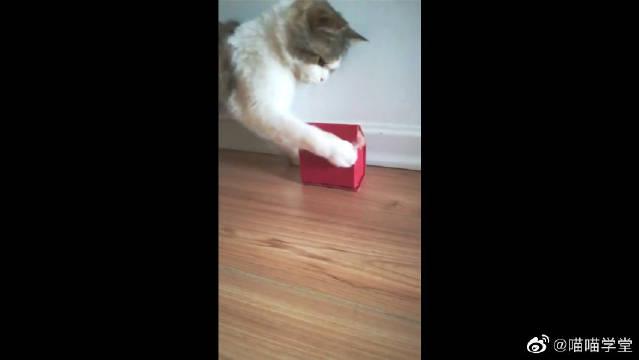 小鼠:让我出去,太难受了!猫:要求太高了,我做不到