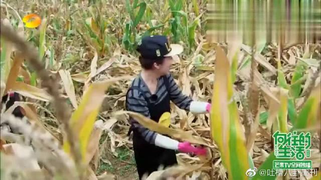 海清李解上演《玉米地之恋》,真是看几遍笑几遍!