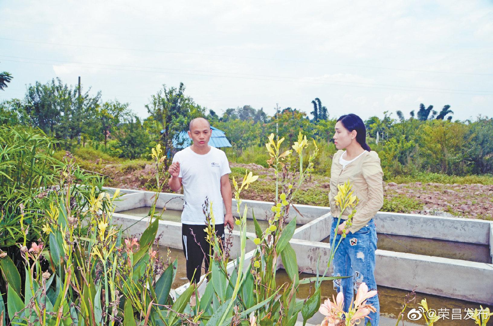 清升镇 漫水桥响铃新村人工湿地扩建项目主体完工