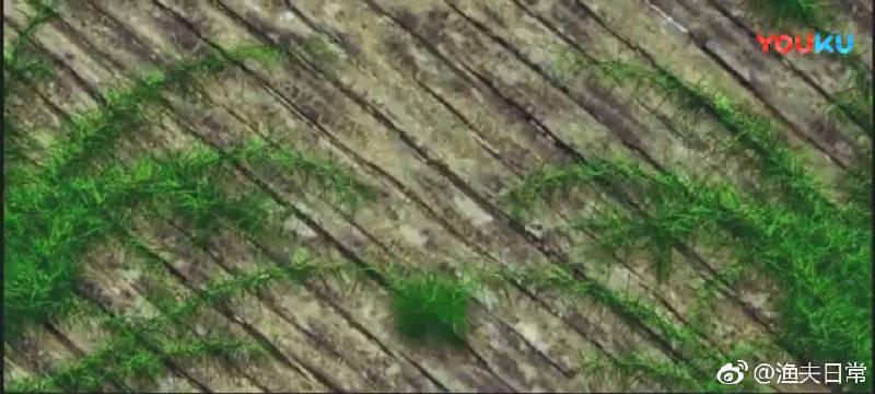 回水湾里全是草, 手竿台钓也是没谁了