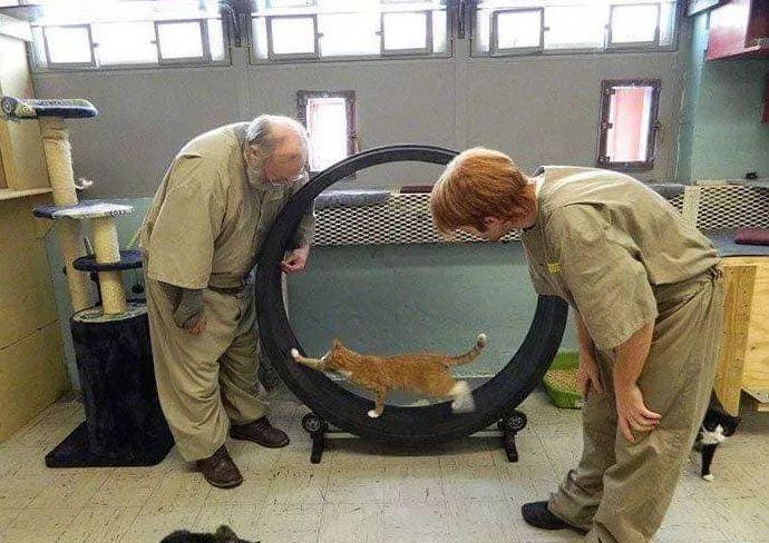 犯人表现好能领养小猫咪!没人不喜欢,即使是花臂猛男