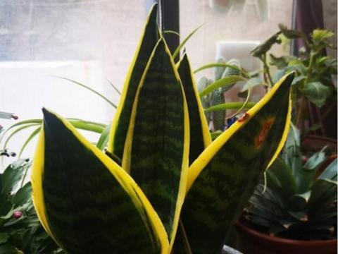 家里养点这植物,轻松去除空气异味,改善环境清新!