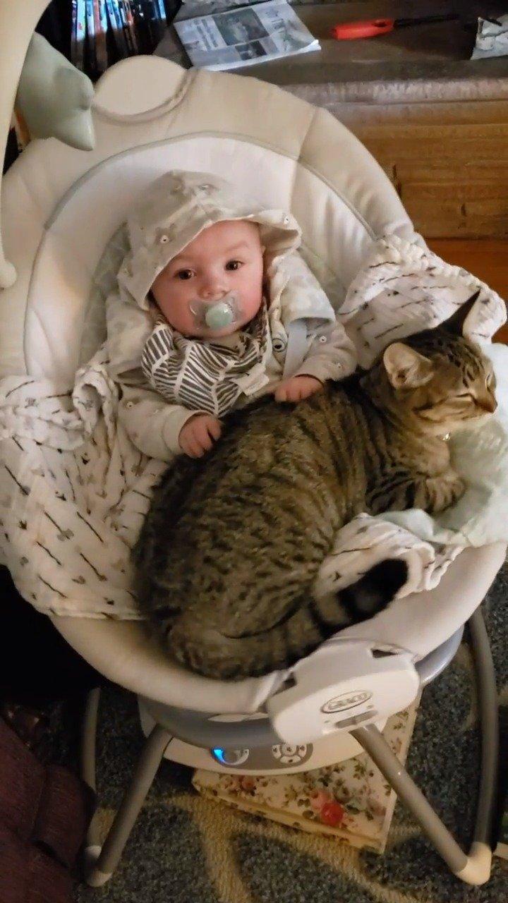 猫咪和宝宝坐在摇篮里摇啊摇,好疗愈!