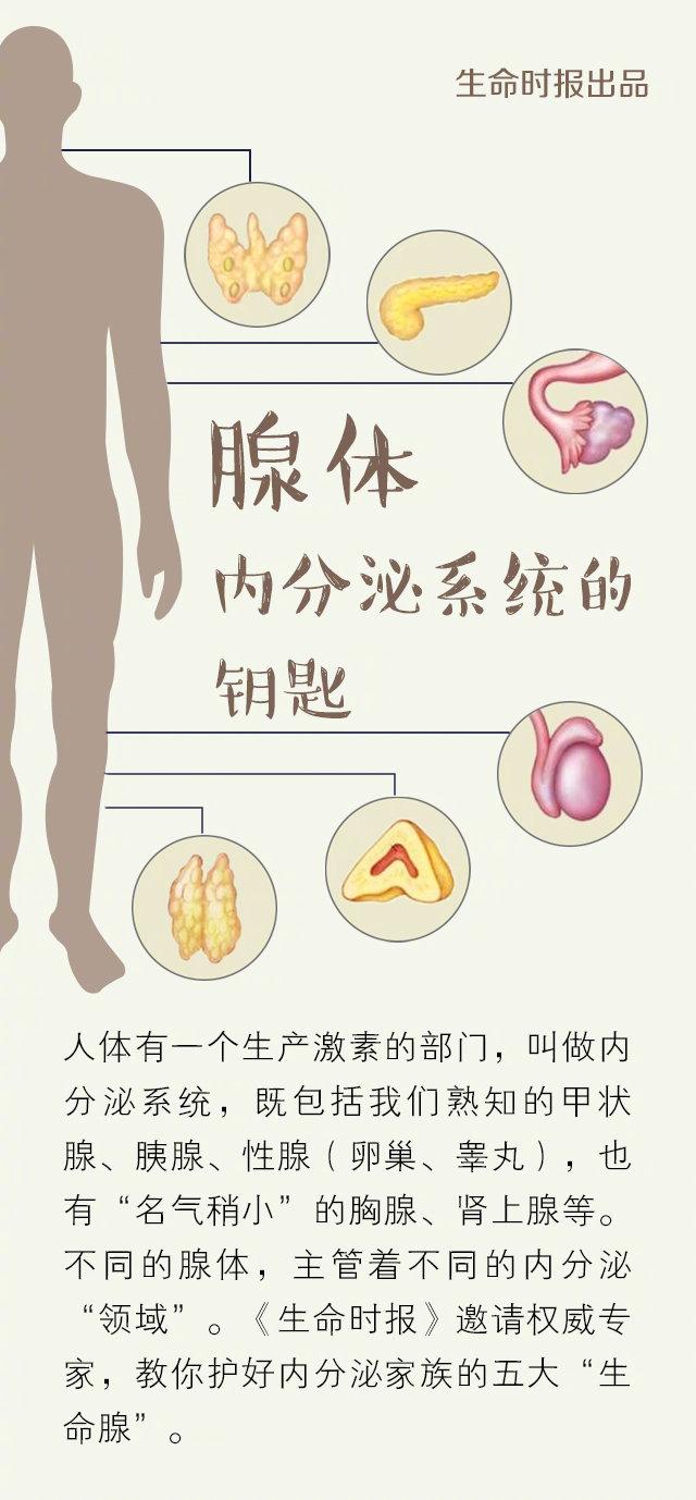 """一份""""腺体""""保养手册,调好你的内分泌"""