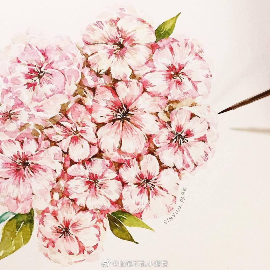 画师 朴施炫 的手绘水彩花
