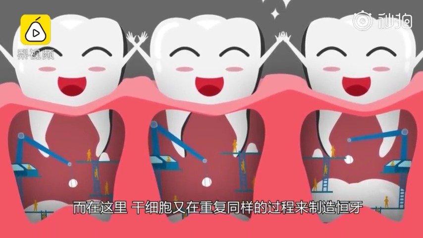 人一生中会有两副牙,一副乳牙一副恒牙