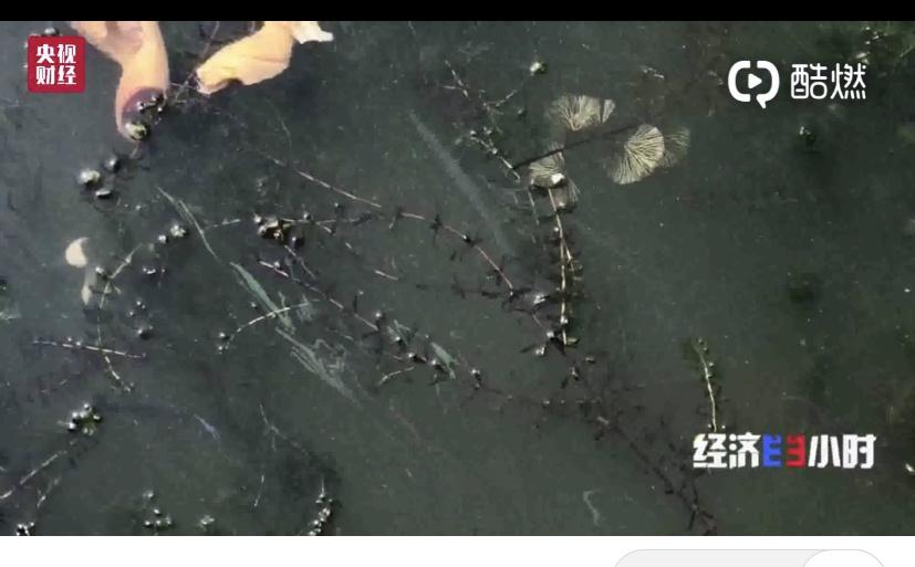 千家农家乐野蛮生长  触目惊心!阳澄湖因盛产大闸蟹而闻名