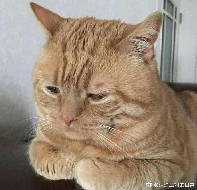 没精打彩的猫!像极了周一上班的我