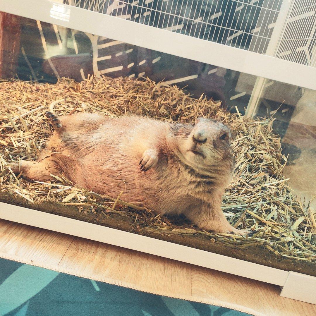 土拨鼠的姿势像极了周末的你