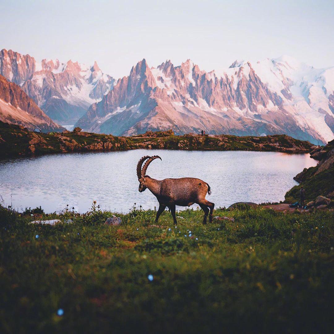 法国的勃朗峰,在这里做一只羊也很幸福吧。