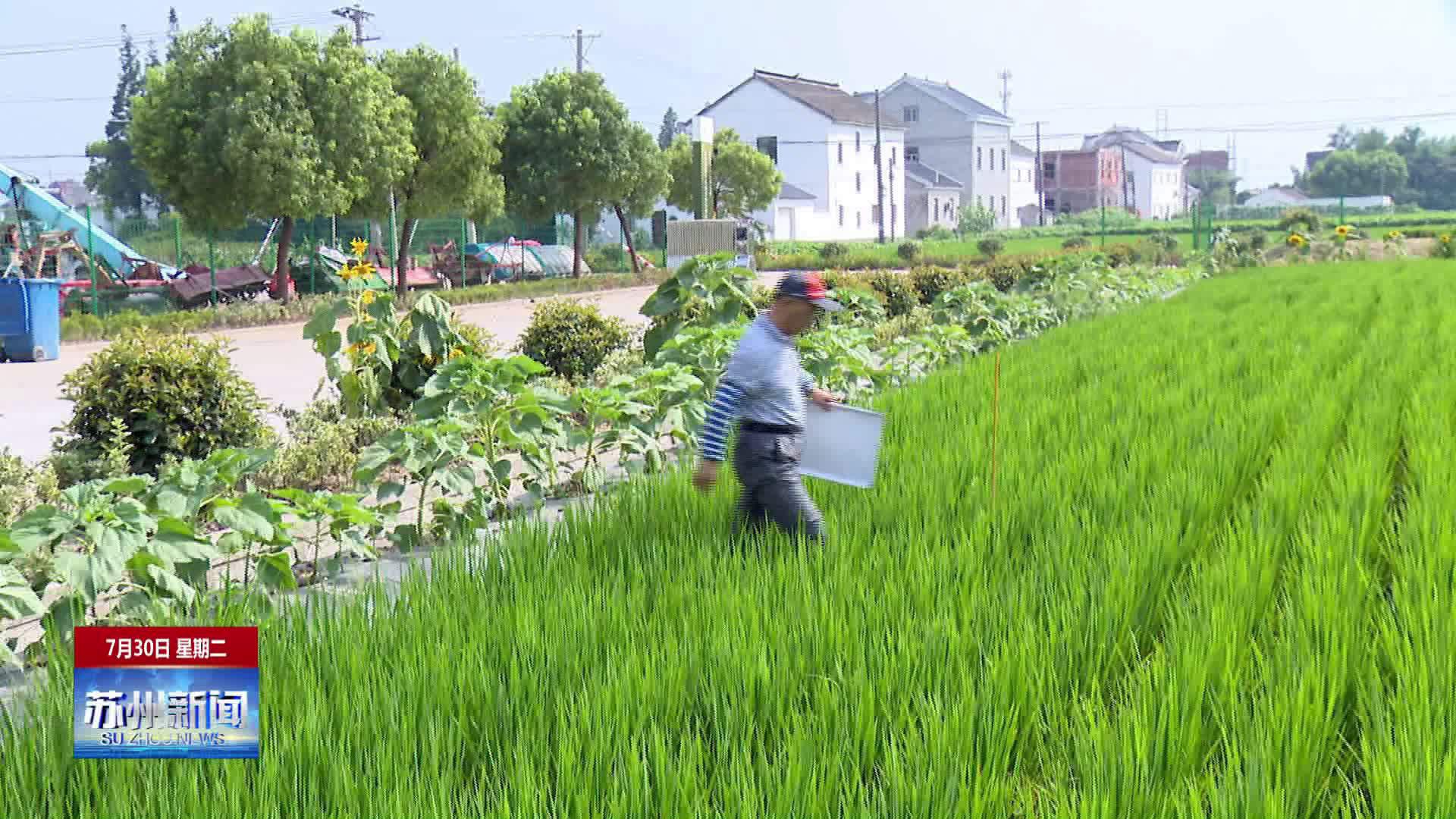 太仓璜泾镇入围2019年全国农业产业强镇建设名单