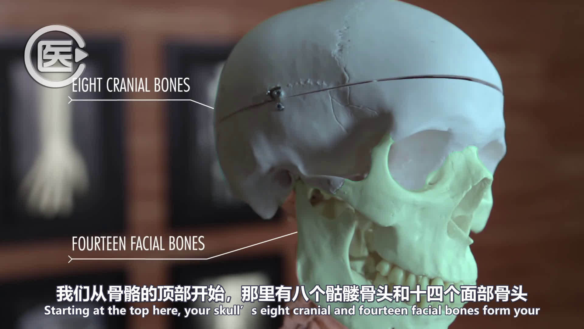 人体解剖学:关节的解剖与功能