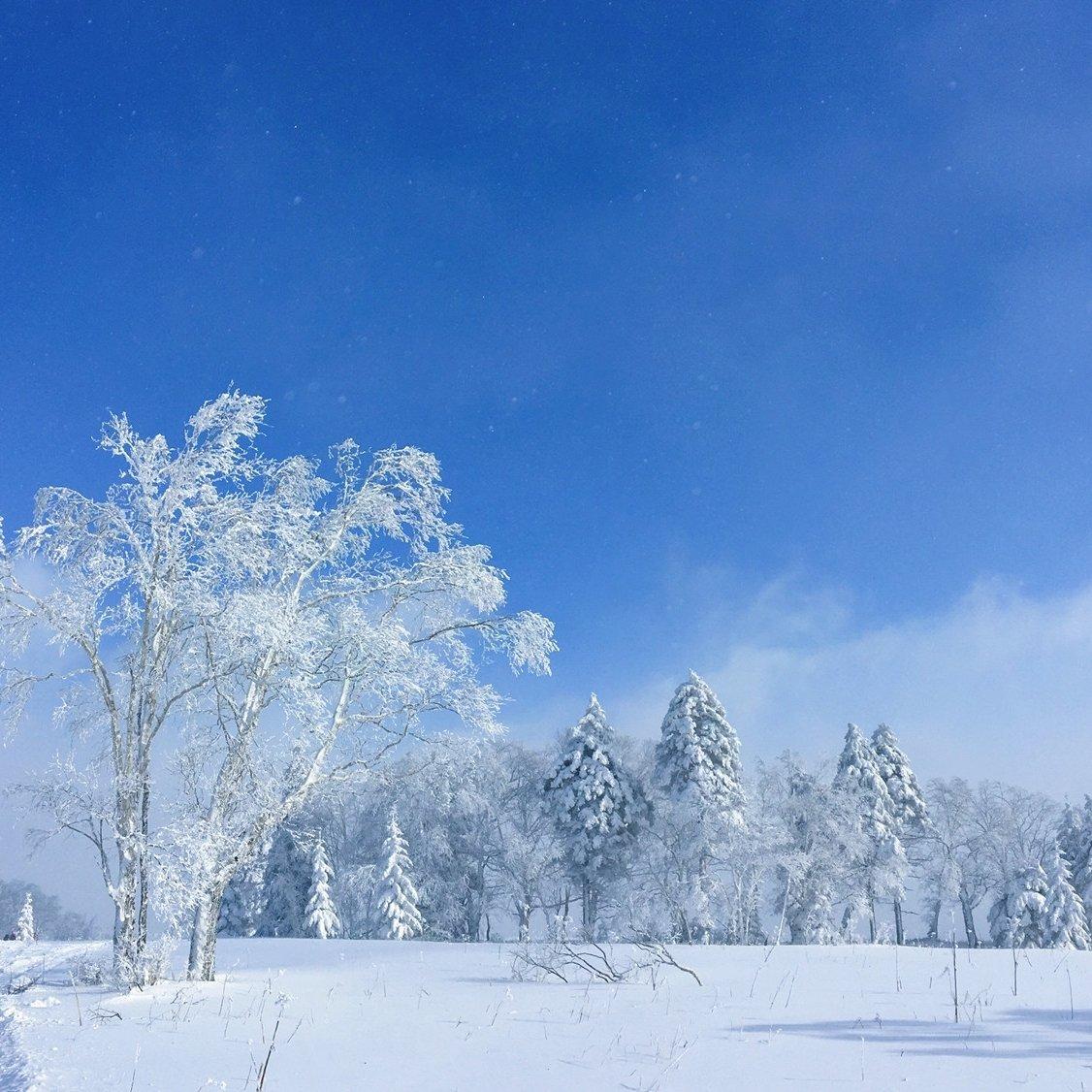 凤凰山上的雾凇堪比雾凇岛 虽然是在零下二十多度