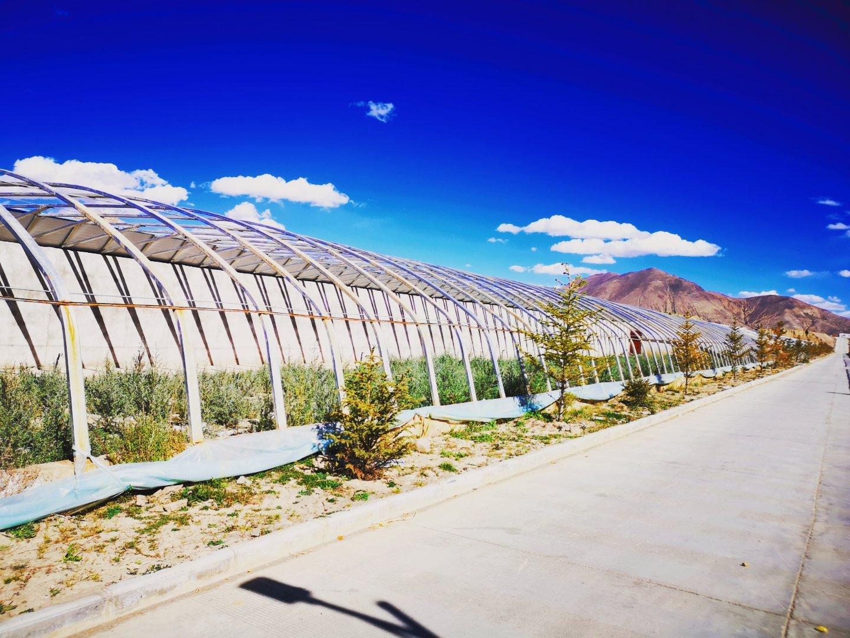 依据生态发展、绿化造林的发展战略,通过专业的沙棘种植育苗技术