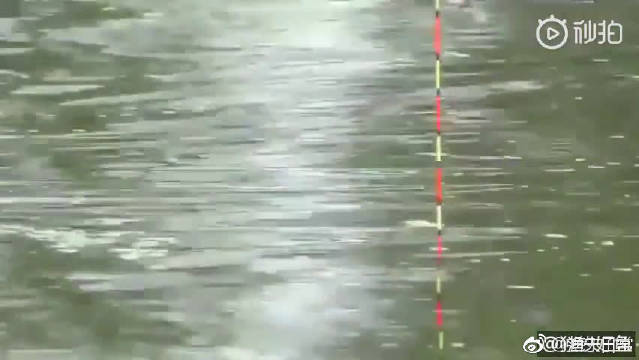 不起眼的小河,鲫鱼,鲤鱼真不少