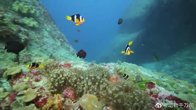 浩瀚无边的海洋中,无数小鱼儿游动,童话一般的画面!