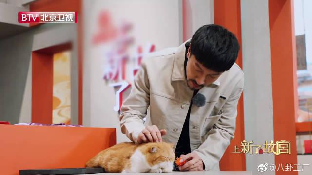 张鲁一给猫戴小花花,故宫皇室化妆品出炉