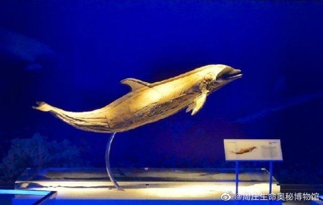 海豚具有齿鲸类典型的形态学性状