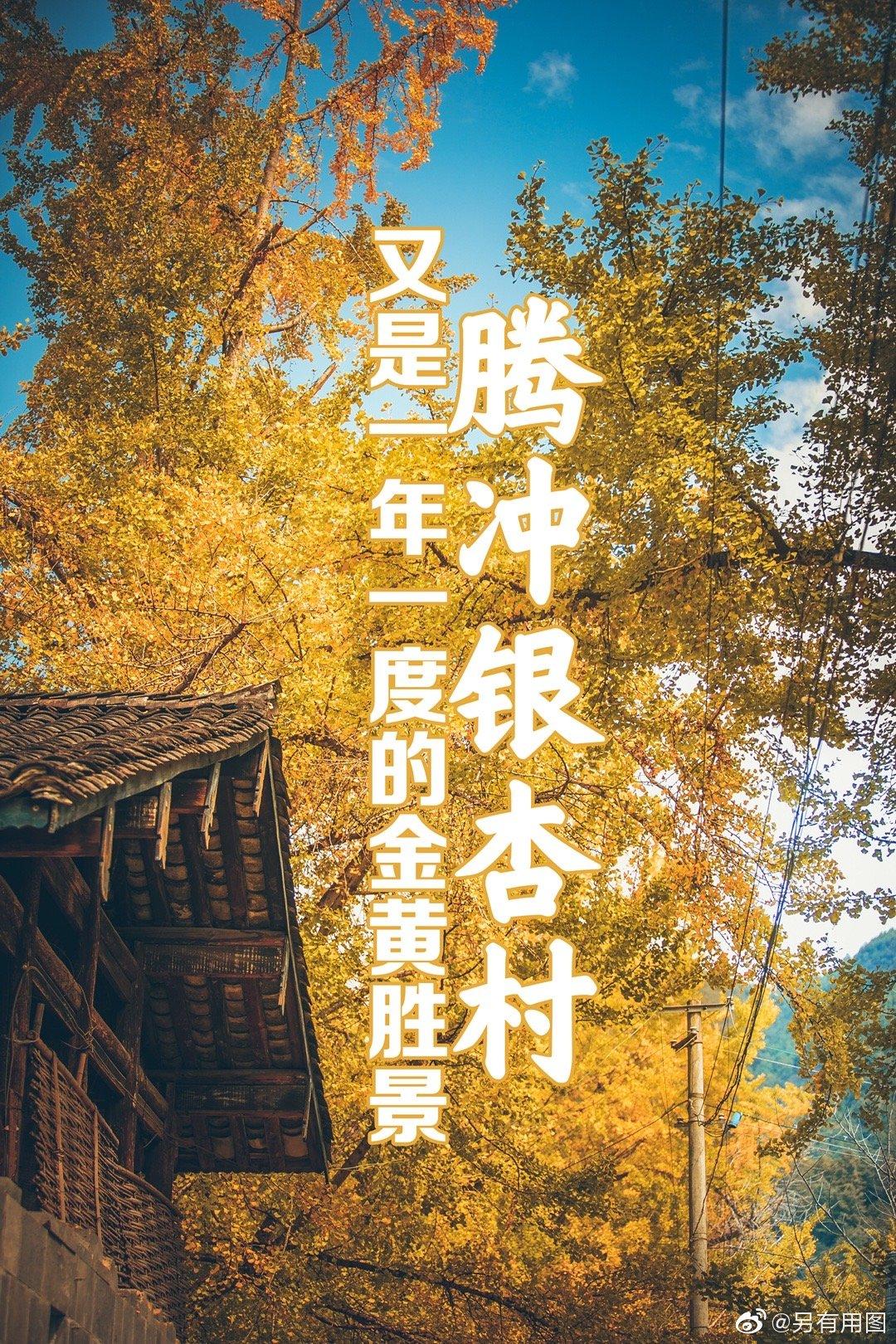 又到了银杏金黄的季节,腾冲的银杏村一片金黄