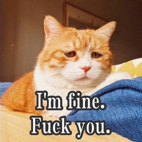 对讲:猫咪里表情的网红表情们对对盘点你的常见包图片