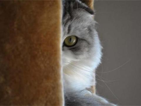 主人洗澡或者上厕所时,为什么猫咪总守门叫个不停?原因哭笑不得